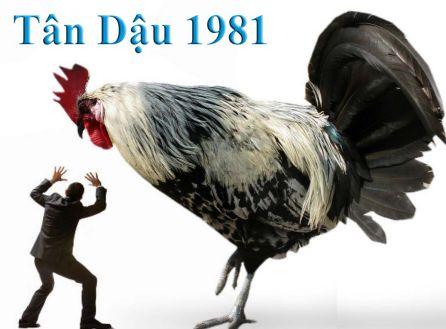 tan-dau-1981-ky-tuoi-nao